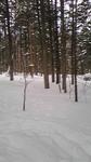 暖かい日差しをさえぎる深い森